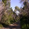 Chusqueya, Parque Nacional Los Alerces (photograph by Kok van Herk)
