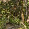 Gavilea araucana (Parque Nacional Los Alerces)