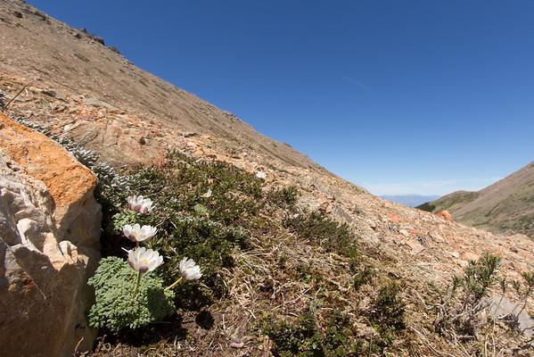 Patagonia 2014: Part 26, PN Los Alerces