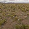 Habitat of Olsynium junceum (between Las Horquetas and Parque Nacional Perito Moreno)