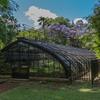 (Jardin Botanico Carlos Thays, Buenos Aires)