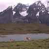Guanaco (Lama guanaco) and Laguna Larga (photograph by Kok van Herk)