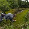 Kok van Herk photographing Ranunculus trullifolius (Parque Nacional Torres del Paine)