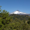 Volcán Antuco, landscape in front dominated by exotic Pinus spec. and introduced Cytisus