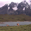 Guanaco (Lama guanaco) and Laguna Larga (photograph by Kok van Herk)