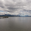 The coast at Puerto Natales and black necked swan