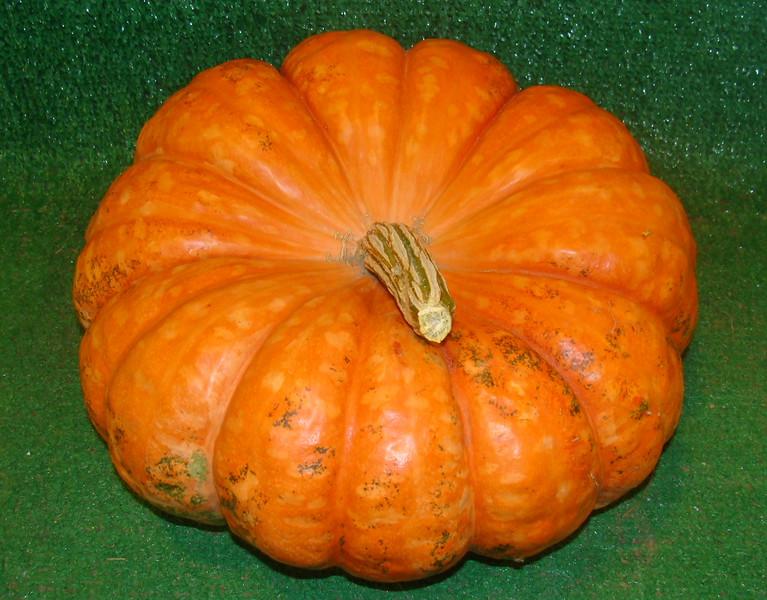 Fluted Pumpkin