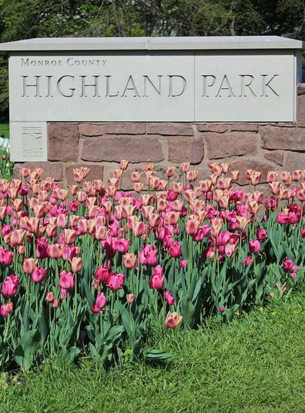Highland Park Tulip Display