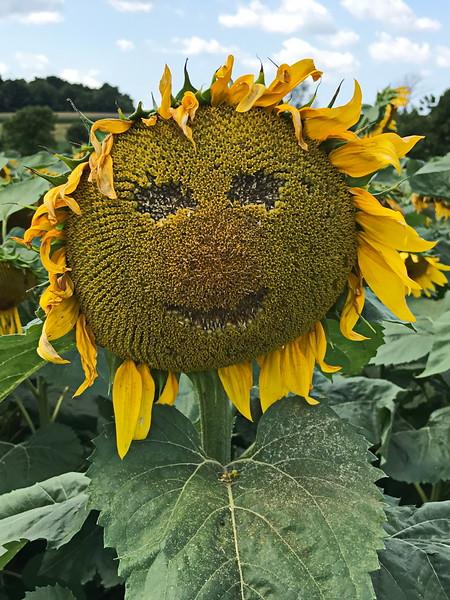 Happy Face Sunflower