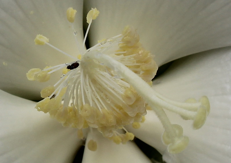 Pistils and Stamens