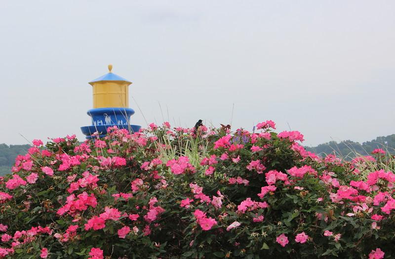 Bird on Pink Rugosa Roses