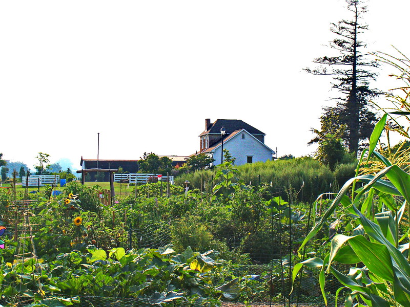 Brighton Community Garden and Groos Farm