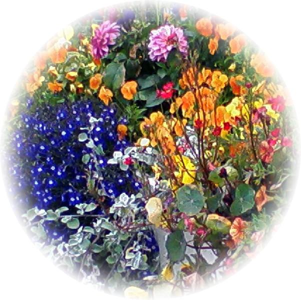 Breckenridge Flower Garden 3