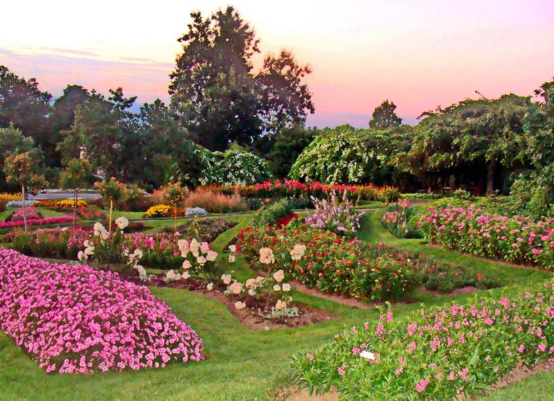 Rose and Flower Garden