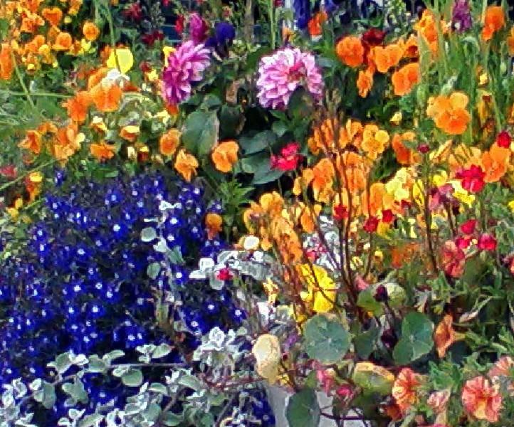 Breckenridge Flower Garden