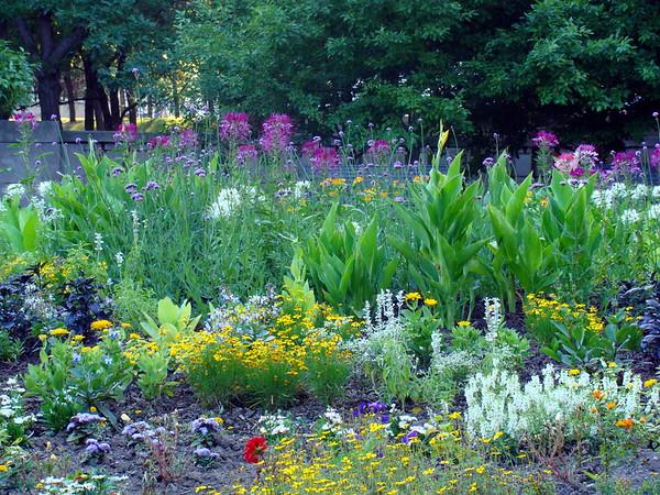 Millennium Park Flower Garden