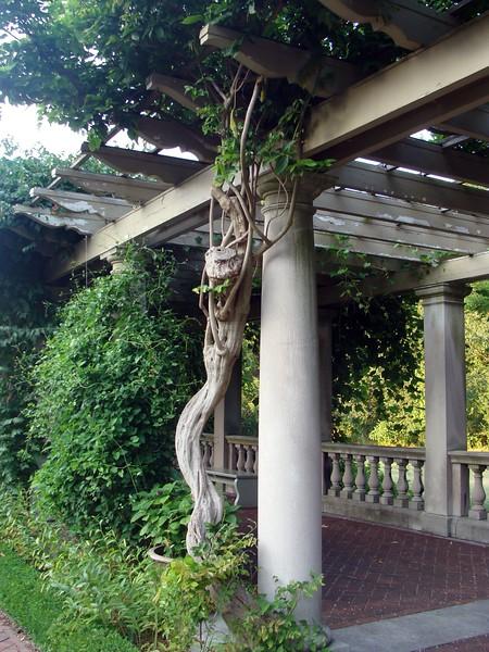 Garden Arbor Vine