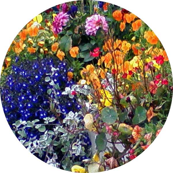 Breckenridge Flower Garden 2