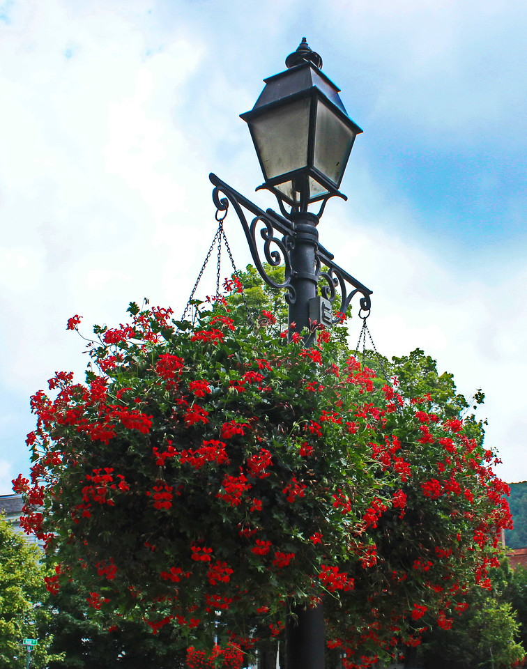 Red Flowers in Hanging Baskets
