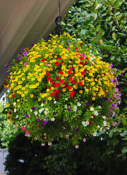 Hanging Flower Basket