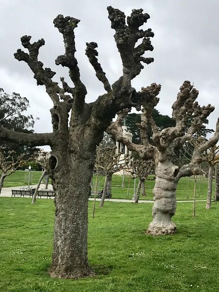 Pruned Trees