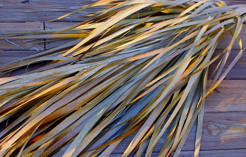 Palm Frond in the Evening