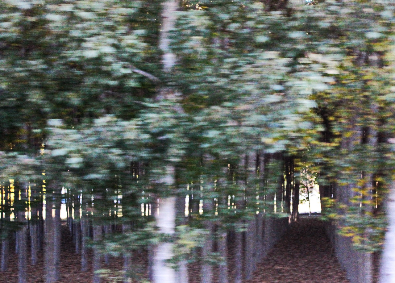 Tree Grove at High Speed