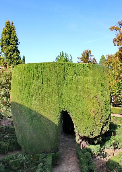 Sculpted Hedge Shelter
