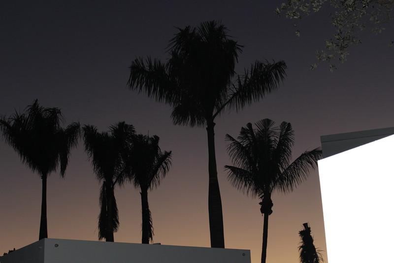 Coconut Palm Trees at Sundown