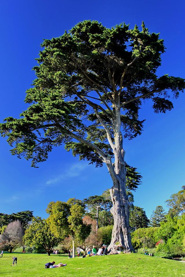 Monterey Cyprus