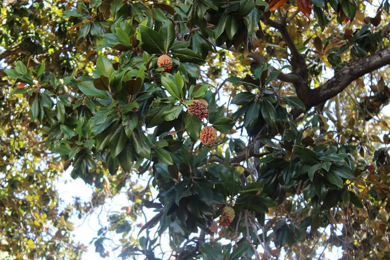 Flowering Tree in the Generalife Gardens
