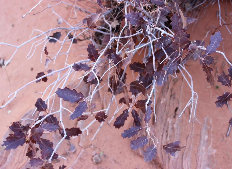 Flora in November