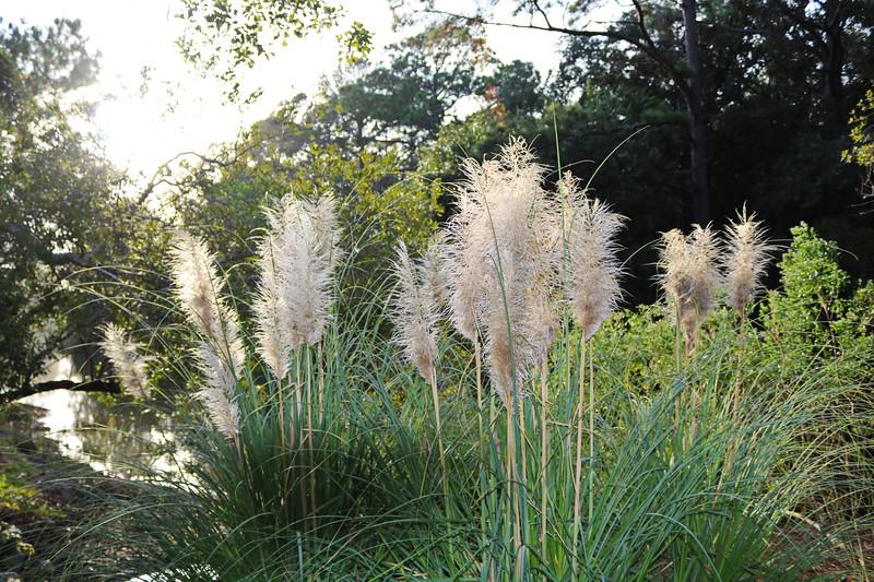 Island Grasses