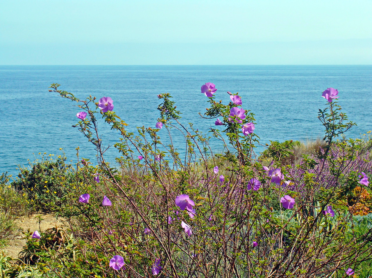 Pacific Coast Wildflowers