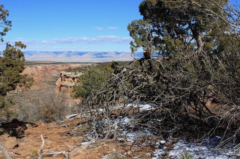 Pinyon-Juniper Landscape