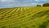 Green Field Near Strathaven - 24 August 2014