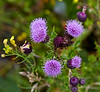 Flowers at Lunderston Bay - 12 July 2014