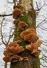 Fungi near the Gryfe Reservoir - 1 January 2016