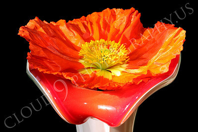 FLOW 00132 An icelandic poppy flower in full blow resting in a vase with a flower design, by Peter J Mancus