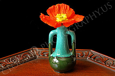 FLOW 00110 An icelandic poppy orange and yellow flower in full bloom in a two-tone green double handle vase, by Peter J Mancus