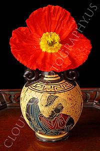 FLOW 00109 An icelandic poppy orange and yellow flower in full bloom in a Grecian marked vase, by Peter J Mancus