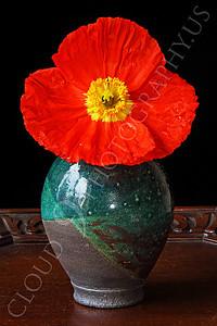 FLOW 00116 An icelandic poppy flower in a green vase, by Peter J Mancus