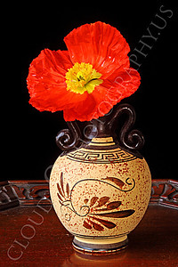 FLOW 00118 An icelandic poppy flower in a Grecian marked vase, by Peter J Mancus
