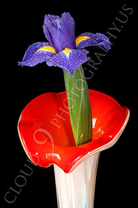 FLOW 00211 An iris flower in a flower shaped vase, by Peter J Mancus