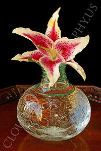FLOW 00317 A stargazer flower in a clear glass vase on a wood table, by Peter J Mancus