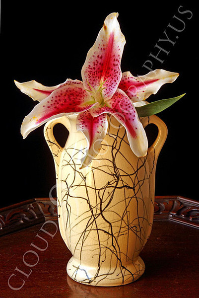 FLOW 00303 A single stargazer flower in a vase on a wood table, by Peter J Mancus