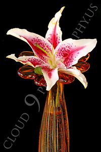 FLOW 00331 A stargazer flower in a gold flower shaped vase, by Peter J Mancus