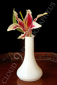 FLOW 00327 A stargazer flower in a small white vase on a wood table, by Peter J Mancus