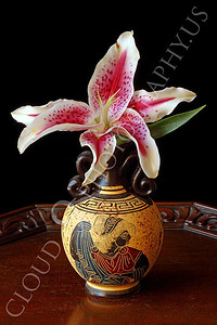 FLOW 00323 A stargazer flower in a vase with Grecian markings on a wood table, by Peter J Mancus