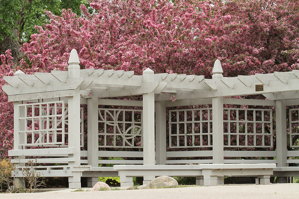 Indian Magic Crabapple And Pergola